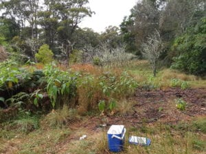 soil sampling environmental consulting