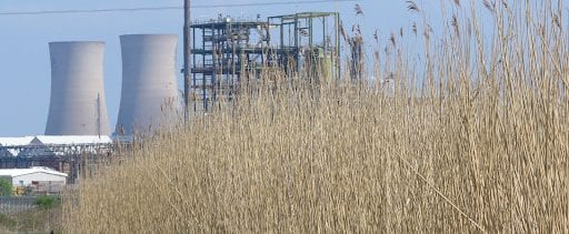 Reed Bed Treatment Chemical Facility Wastewater