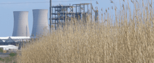 mixed wastewater reedbed systems