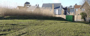 reed beds pesticide remediation